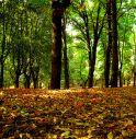 Ha piantato marijuana nel bosco: arrestato