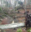 Accordo Intesa Sanpaolo e Federlegno per la gestione del legname triveneto colpito dal maltempo: 100 milioni per evitarne il degrado