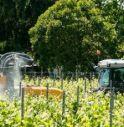 prosecco pesticidi tumori