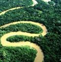 INGHIOTTITO DAL RIO DELLE AMAZZONI