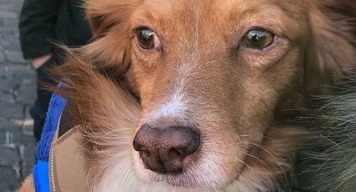 Il coraggioso cane Biagio premiato con gli eroi a 4 zampe del ponte Morandi