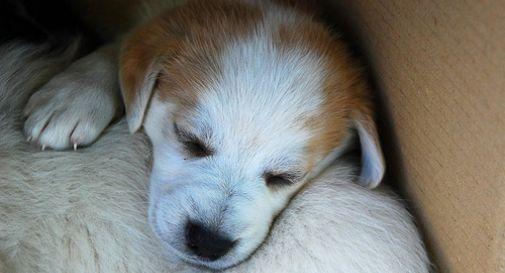Salvati 106 cuccioli di cane dalla Forestale