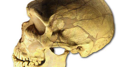Lei, Neanderthal. Lui, Sapiens. Scoperta prova dell'incrocio