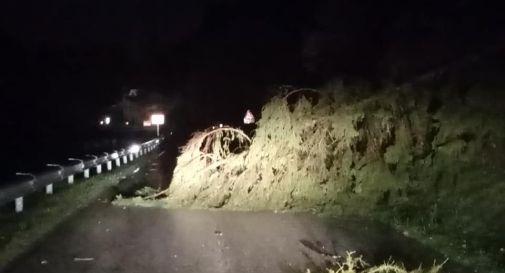 Vento forte e maltempo su Vittorio Veneto: alberi caduti e danni