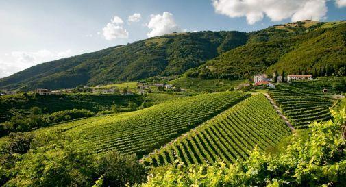 Grandine e gelo sull'Italia: danni a vigneti, frutteti e ortaggi