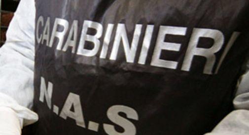 Sporco e cibi mal conservati, blitz dei Nas a Pieve di Soligo: chiuso il negozio di alimentari