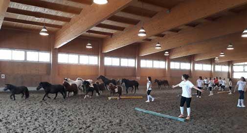 Il cavallo per gli sportivi