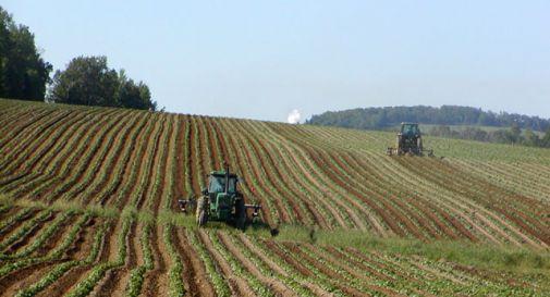 Veneto, 3,5 miliardi per l'agricoltura