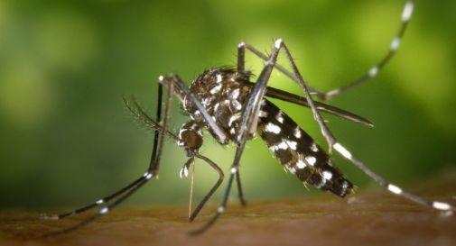 L' uomo che stermina le zanzare con i suoi gas intestinali