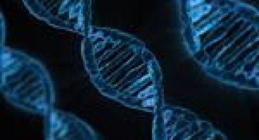Editing genetico migliore scoperta del 2015 per 'Science'