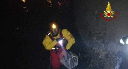 """Gatta """"suicida"""" prende male le misure: dopo un volo di 20 metri finisce nel fiume"""