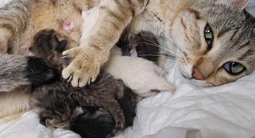 Gatta incinta abbandonata, partorisce 5 cuccioli in auto