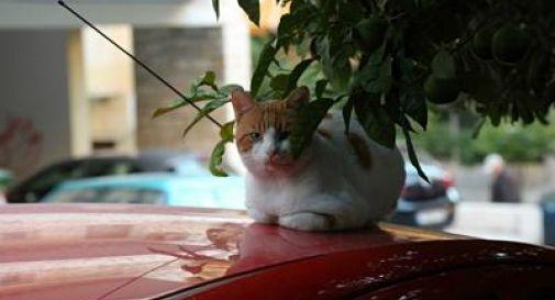 Sterminio di gatti in Australia