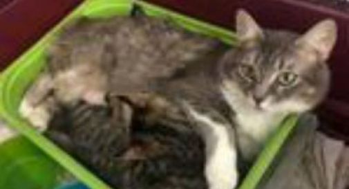 La storia di Geremia, gattino disabile, e della sua mamma gatta che non lo lascia mai solo
