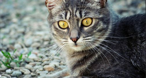 Oggi è la giornata internazionale del gatto