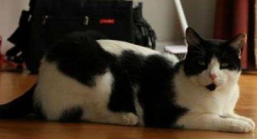 Felini elettori in Nuova Zelanda, gatto riceve tessera per recarsi alle urne