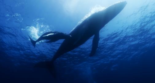 Super multa per la 'prigione delle balene'