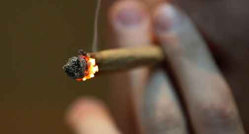 intervista cannabis quindicinale