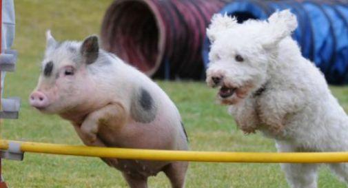 Maiali e cani vogliono entrambi vivere