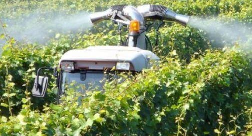 Problema pesticidi anche in Alpago, nasce un comitato per vietarli
