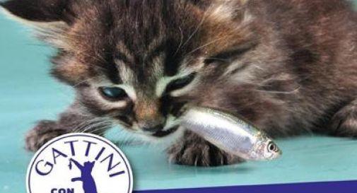 Gattini con Salvini, la 'trollata' del Capitano