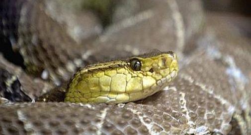 Iraq, invasione di serpenti nel nord: decine di morti, paura a Sayid Dkheel